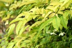 Wassertröpfchen auf Blättern Stockfotos