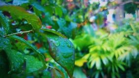 Wassertröpfchen auf Blättern Stockbild