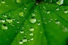 Wassertröpfchen auf einem Blatt Lizenzfreie Stockfotografie