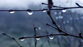 Wassertröpfchen auf einem Zweig Lizenzfreies Stockbild