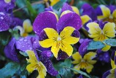 Wassertröpfchen auf einer Blume stockbilder