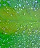 Wassertröpfchen auf grünem Blatt Lizenzfreies Stockfoto