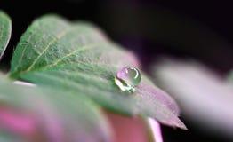 Wassertröpfchen auf grünem Blatt Stockfotos