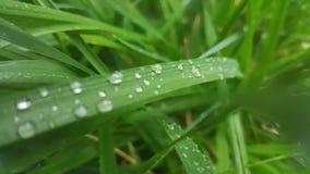 Wassertröpfchen auf Grasblättern Lizenzfreie Stockfotografie