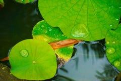 Wassertröpfchen auf Urlaub Lizenzfreie Stockfotografie