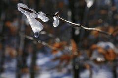 Wassertröpfchen weg von schmelzendem Schnee Stockbild