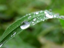 Wassertropfen Lizenzfreie Stockfotografie