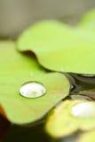 Wassertropfen Lizenzfreies Stockfoto