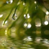 Wassertropfen Stockfoto