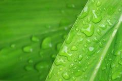 Wassertropfen auf Betriebsblatt lizenzfreies stockbild