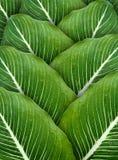 Wassertropfen auf Blättern Lizenzfreie Stockfotos