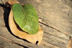 Wassertropfen auf Blättern Lizenzfreies Stockbild