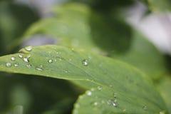 Wassertropfen auf Blatt Stockfotografie