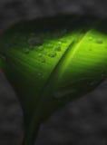 Wassertropfen auf Blatt Lizenzfreies Stockfoto