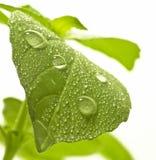 Wassertropfen auf Blatt. lizenzfreie stockfotografie