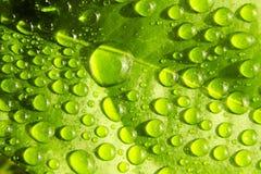 Wassertropfen auf Blatt Lizenzfreie Stockfotos