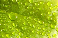 Wassertropfen auf Blatt Lizenzfreie Stockfotografie