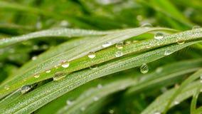 Wassertropfen auf Blatt nach Regen Lizenzfreies Stockfoto