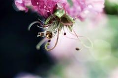 Wassertropfen auf Blume nach Regen lizenzfreie stockfotos