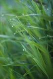 Wassertropfen auf dem grünen Gras Stockfotografie