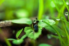 Wassertropfen auf dem grünen Gras Lizenzfreie Stockfotos