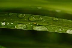 Wassertropfen auf dem Gras Lizenzfreie Stockfotos
