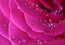 Wassertropfen auf dem rosafarbenen stiegen stockfotos