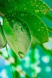 Wassertropfen auf den Blättern Stockfotos