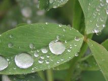 Wassertropfen auf den Blättern morgens Stockfotografie