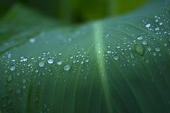 Wassertropfen auf einem Blatt Stockfotografie