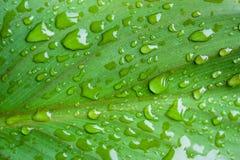 Wassertropfen auf einem Blatt Lizenzfreies Stockfoto