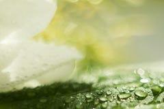 Wassertropfen auf einem grünen Blatt, neue Grüns nach einem Regen, Makroschießen, eine große Nahaufnahme, selektiver Fokus, der P stockfotos