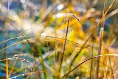 Wassertropfen auf einem Gras Lizenzfreies Stockfoto