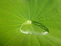 Wassertropfen auf einem Lotosblatt Stockbild