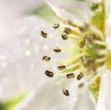 Wassertropfen auf einer Blume Stockfotografie