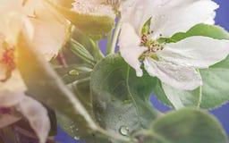 Wassertropfen auf einer Blume Stockfoto