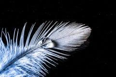 Wassertropfen auf einer Makrobeschaffenheit der weißen Feder auf Himmelhintergrund der dunklen Nacht Stockbild