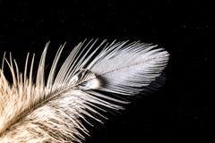 Wassertropfen auf einer Makrobeschaffenheit der weißen Feder auf Himmelhintergrund der dunklen Nacht Stockfotografie