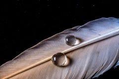 Wassertropfen auf einer Makrobeschaffenheit der weißen Feder auf Himmelhintergrund der dunklen Nacht Stockfoto