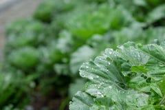 Wassertropfen auf Gemüse Stockfoto