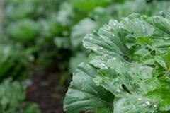 Wassertropfen auf Gemüse Stockbilder