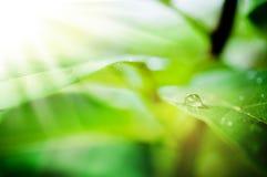 Wassertropfen auf grünem Blatt Lizenzfreies Stockfoto