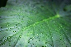Wassertropfen auf Grünpflanze nach Regen Stockfoto