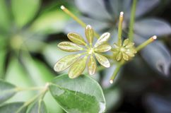 Wassertropfen auf Grünpflanze nach Regen Stockbild