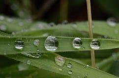 Wassertropfen auf Gras Stockfotos