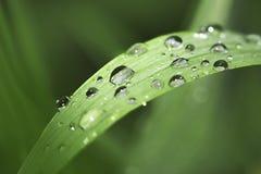 Wassertropfen auf Grasblatt Stockfotos