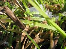Wassertropfen auf Grasblatt Lizenzfreie Stockbilder
