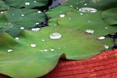 Wassertropfen auf Lotosblättern Stockfotografie