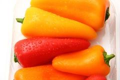 Wassertropfen auf Pfeffern von Farben Stockfoto