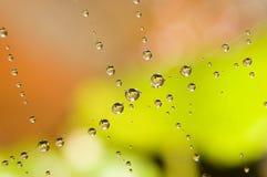 Wassertropfen auf Spinnenweb Stockbild